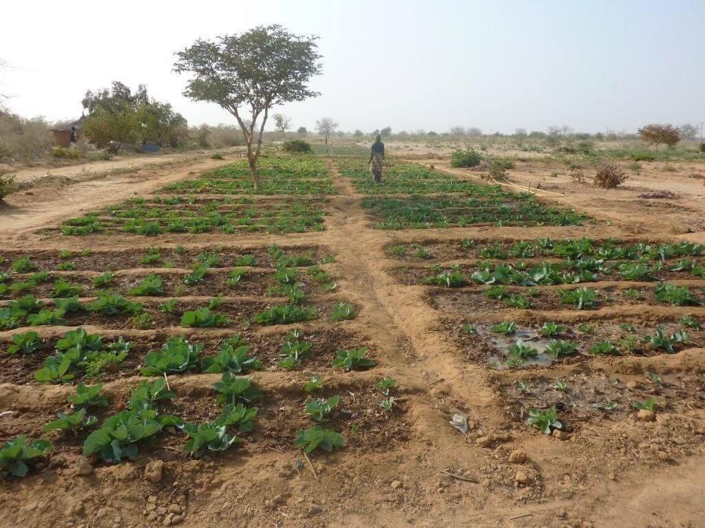 Engagement de Périclès Group auprès de Tree-Nation au Niger